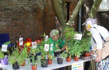 NFTS open gardens 2