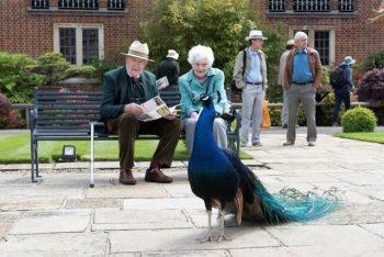 Open Gardens - John & June Lindblom